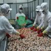 Thị trường nhận nhiều lao động Việt Nam nhất