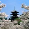 Du học Nhật: hành trang lên đường