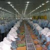 Đơn hàng xuất khẩu lao động làm chả cá tại Nhật Bản