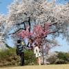 Đi du học Nhật Bản cần những điều kiện gì?