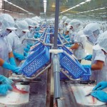 Tuyển thực tập sinh nữ chế biến thủy sản tại Nhật Bản