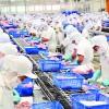 Đơn hàng chế biến thủy sản tại Nhật Bản