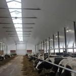 Tuyển nam, nữ chăn nuôi bò sữa tại Nhật Bản