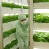 Tuyển 10 nữ làm nông nghiệp tại Toyama – Nhật Bản