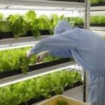 Tuyển gấp 20 nữ làm nông nghiệp tại Nhật Bản