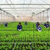 Tuyển 10 nữ trồng rau tại Nhật Bản tháng 3/2016