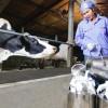 Tuyển gấp 30 nữ làm trang trại chăn nuôi tại Hokkaido