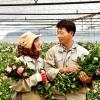 Tuyển 15 nữ đi xuất khẩu lao động Nhật Bản trồng hoa