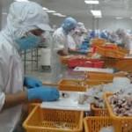 Tuyển gấp 15 lao động nuôi và chế biến sò tại Nhật Bản
