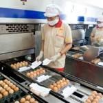 Tuyển 40 lao động phân loại và đóng gói trứng tại Ibaraki