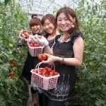 Tuyển 20 nữ trồng cà chua tại Nagasaki, Nhật Bản