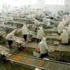 Tuyển 19 nam sản xuất thực phẩm tại Cao Hùng – Đài Loan