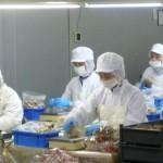 Tuyển gấp 09 nữ làm đóng gói nấm tại Nagano, Nhật Bản