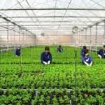 Tuyển 05 nữ xuất khẩu lao động tại Nhật Bản trồng rau màu