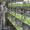 Du học Nhật Bản ngành nông nghiệp nên chọn trường nào?