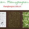 Cây trổ hoa từ những tờ báo giấy – phát minh độc đáo chỉ có ở Nhật Bản