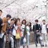 Có nên du học Nhật Bản ngành kế toán ?