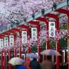 58 trường Nhật ngữ tốt nhất Nhật Bản