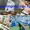 Đơn hàng đóng gói thực phẩm xuất khẩu lao động Nhật Bản 2018