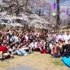 Lý do nên đi du học Nhật Bản kỳ tháng 4
