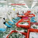 Tuyển 06 nữ chế biến thủy hải sản đông lạnh tại Hokkaido