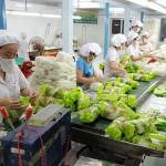 Xuất khẩu lao động Nhật bản đóng gói thực phẩm tại Nagano