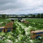 Những lợi ích khi đi đơn hàng nông nghiệp ngắn hạn Nhật Bản