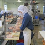 Có nên đi XKLĐ Nhật Bản đơn hàng chế biến thịt gà?