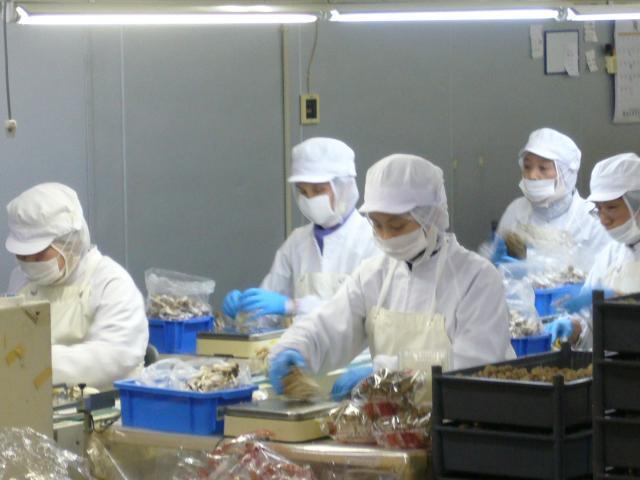 Đi xuất khẩu lao động đóng gói nấm tại Nhật Bản Lương 28 triệu