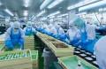Cảnh báo tình trạng lừa đảo người đi xuất khẩu lao động Nhật Bản