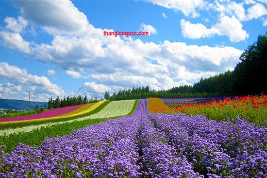 xkld Hokkaido nhật bản