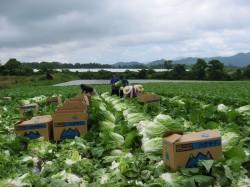 đơn hàng nông nghiệp ngắn hạn Nhật Bản