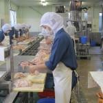 XKLĐ Nhật Bản đơn hàng chế biến thịt gà