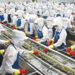 Tuyển nữ Xuất Khẩu Lao Động Nhật Bản nghề chế biến thủy sản