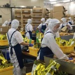 Đơn hàng thực phẩm Đài Loan tăng ca 100 tiếng